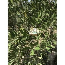 Оливковое мыло KURTES с ароматом жасмина - 90г.